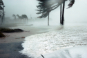 3 Crucial Tips to Survive a Hurricane